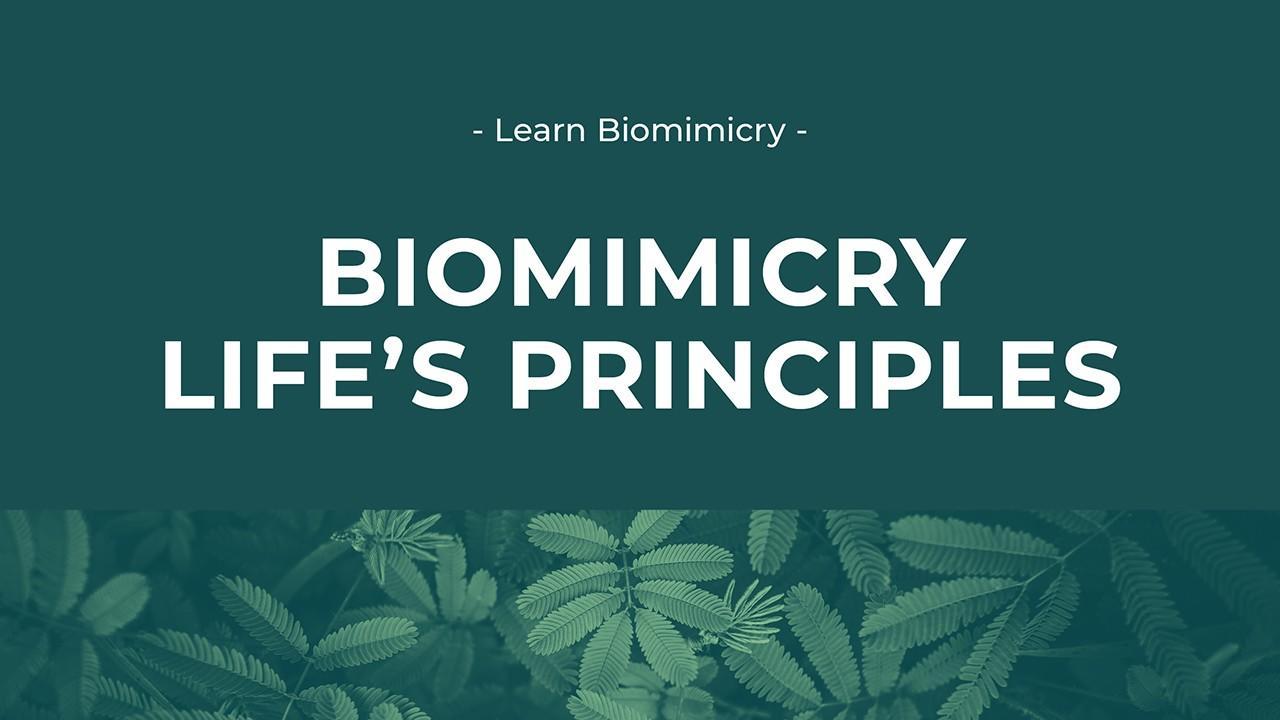 Life's Principles Image