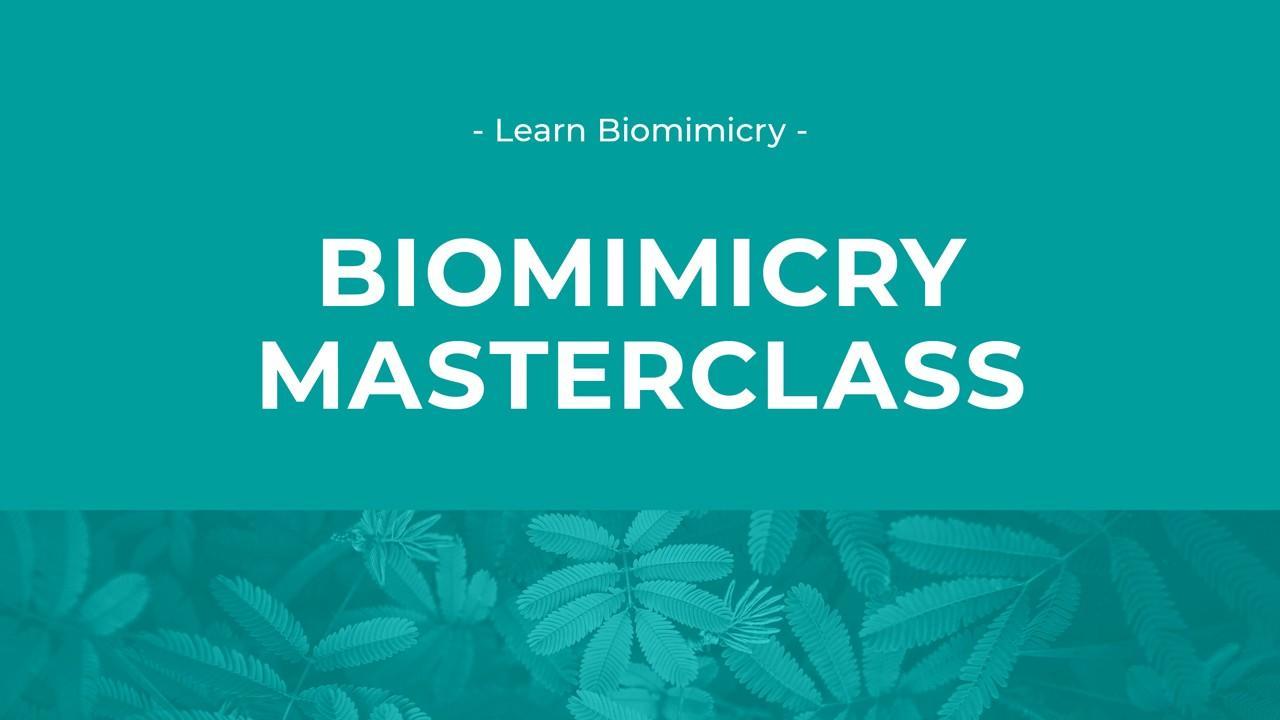 Biomimicry Masterclass image