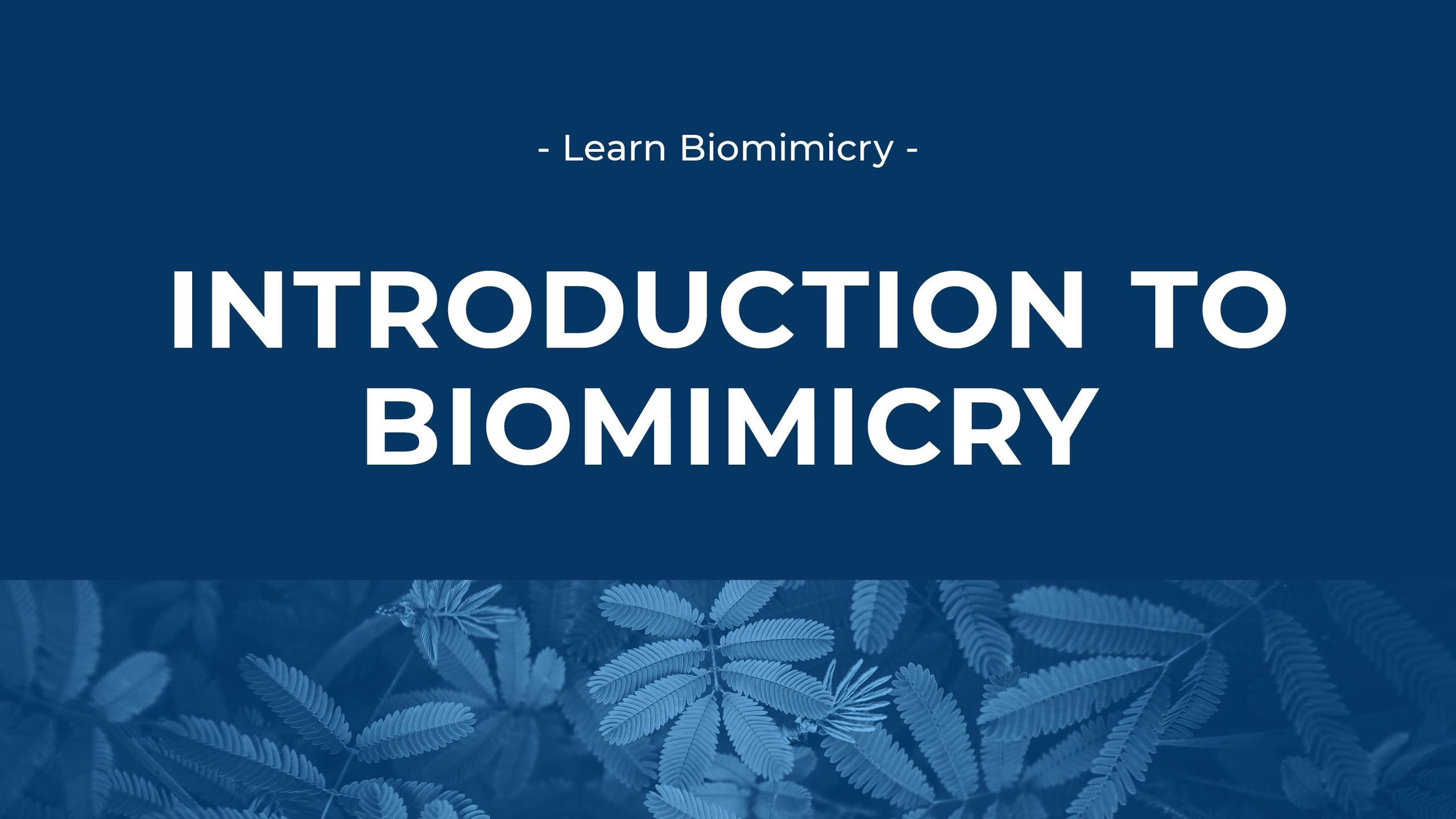 Introduction to Biomimicry image