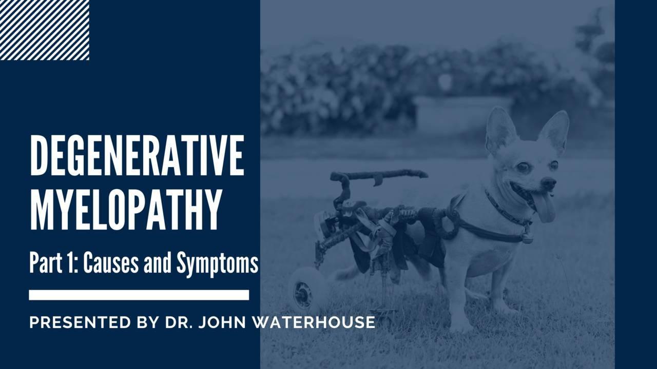 Degenerative Myelopathy Part 1