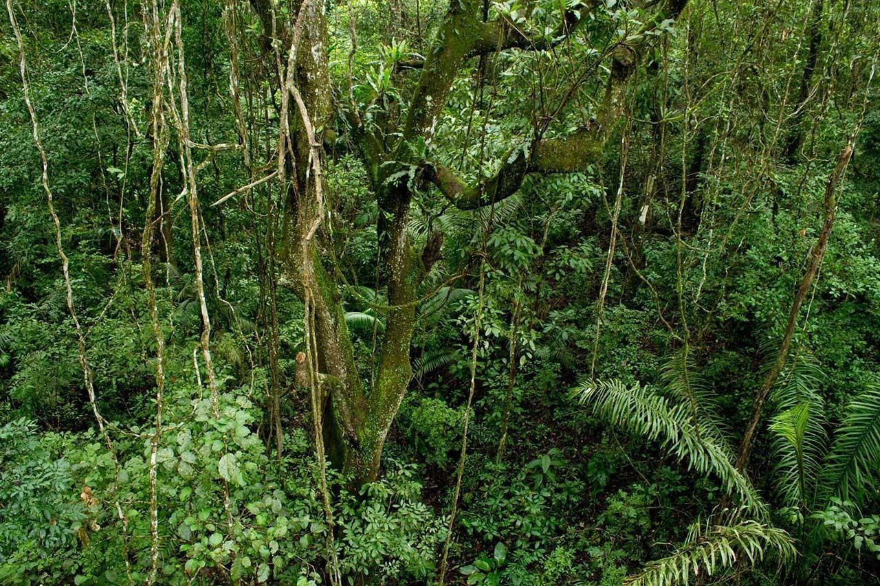 Soberanía National Park