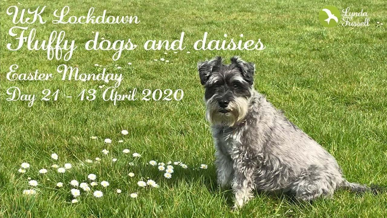 UK Lockdown - 13 April 2020: Fluffy dogs and daisies