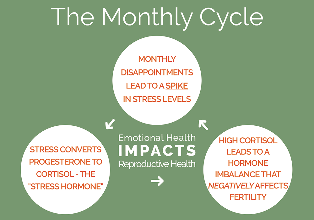 Organic Conceptions Monthly Cycle Graphic