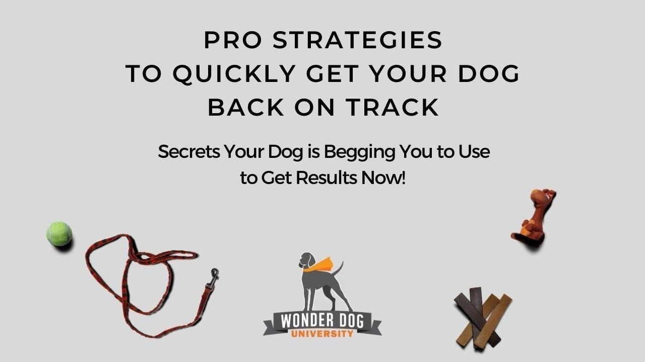 Pro Strategies Guide E-Book