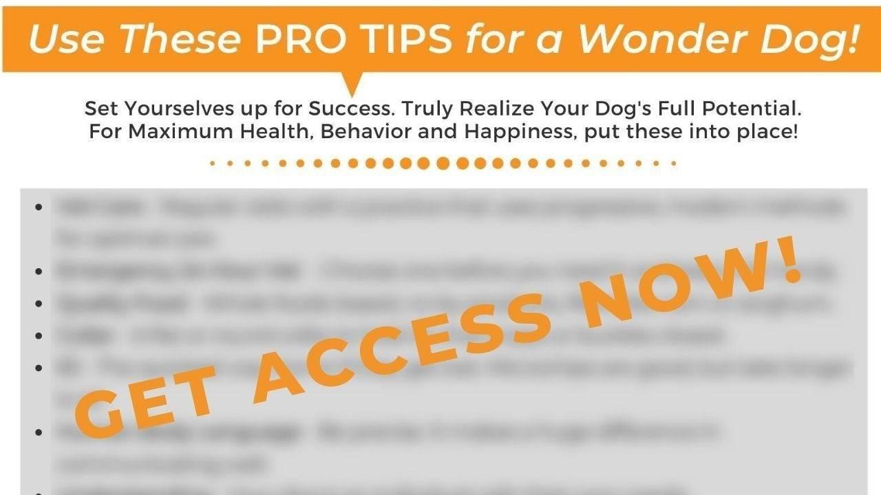 Pro Tips List