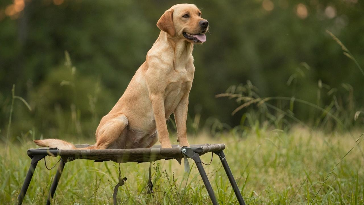 how long you should train your dog each day