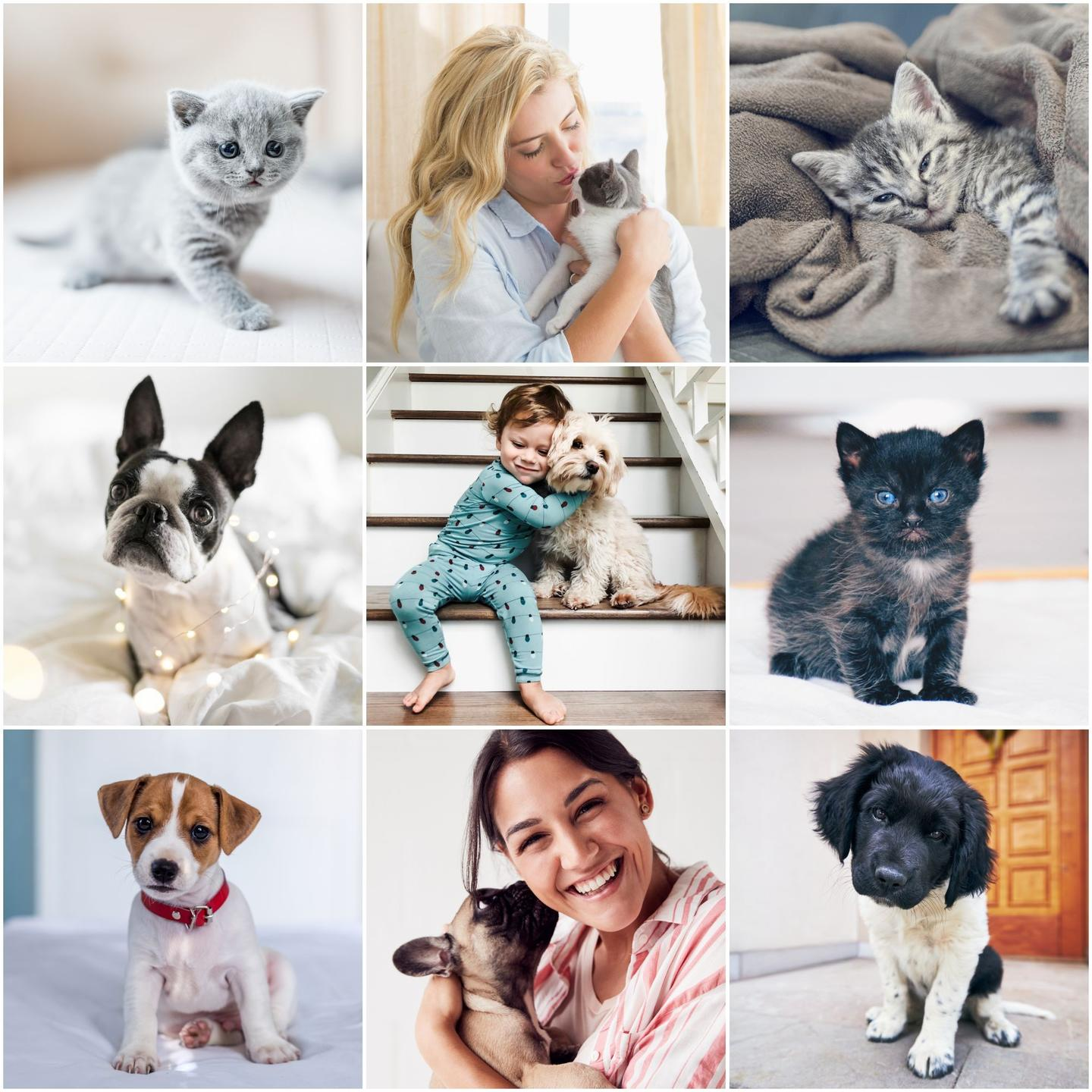 Pet Photography Presets