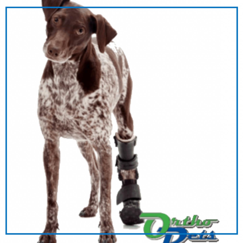 OrthoPets Hind Prosthetic