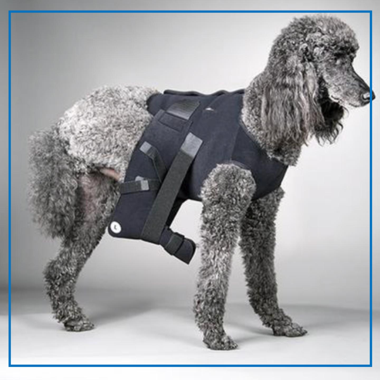 DogLeggs (Hip Joint Protective Wrap)