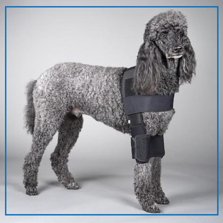 DogLeggs (Hobble) Vest
