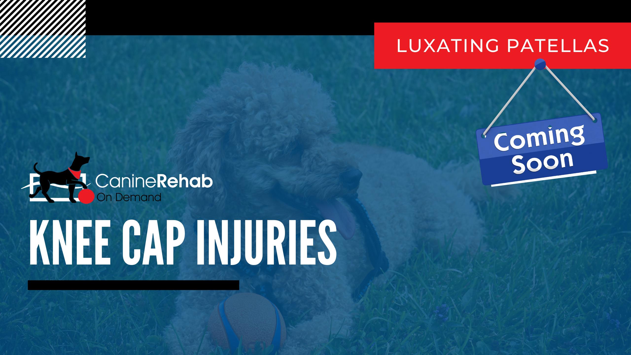 Knee Cap Injuries Coming Soon