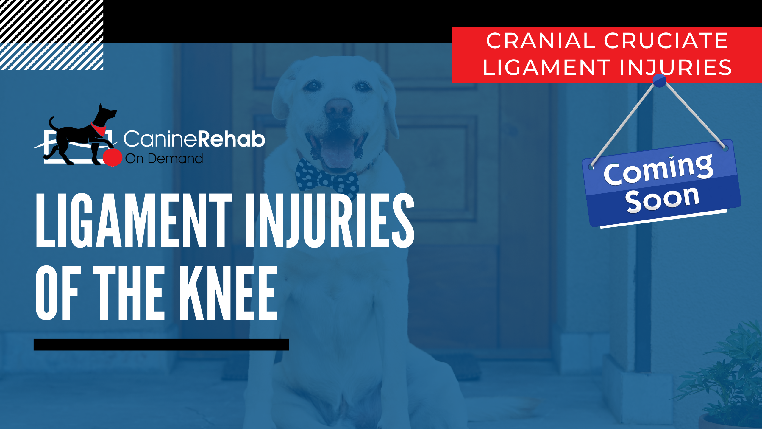 Ligament Injuries of the Knee Coming Soon