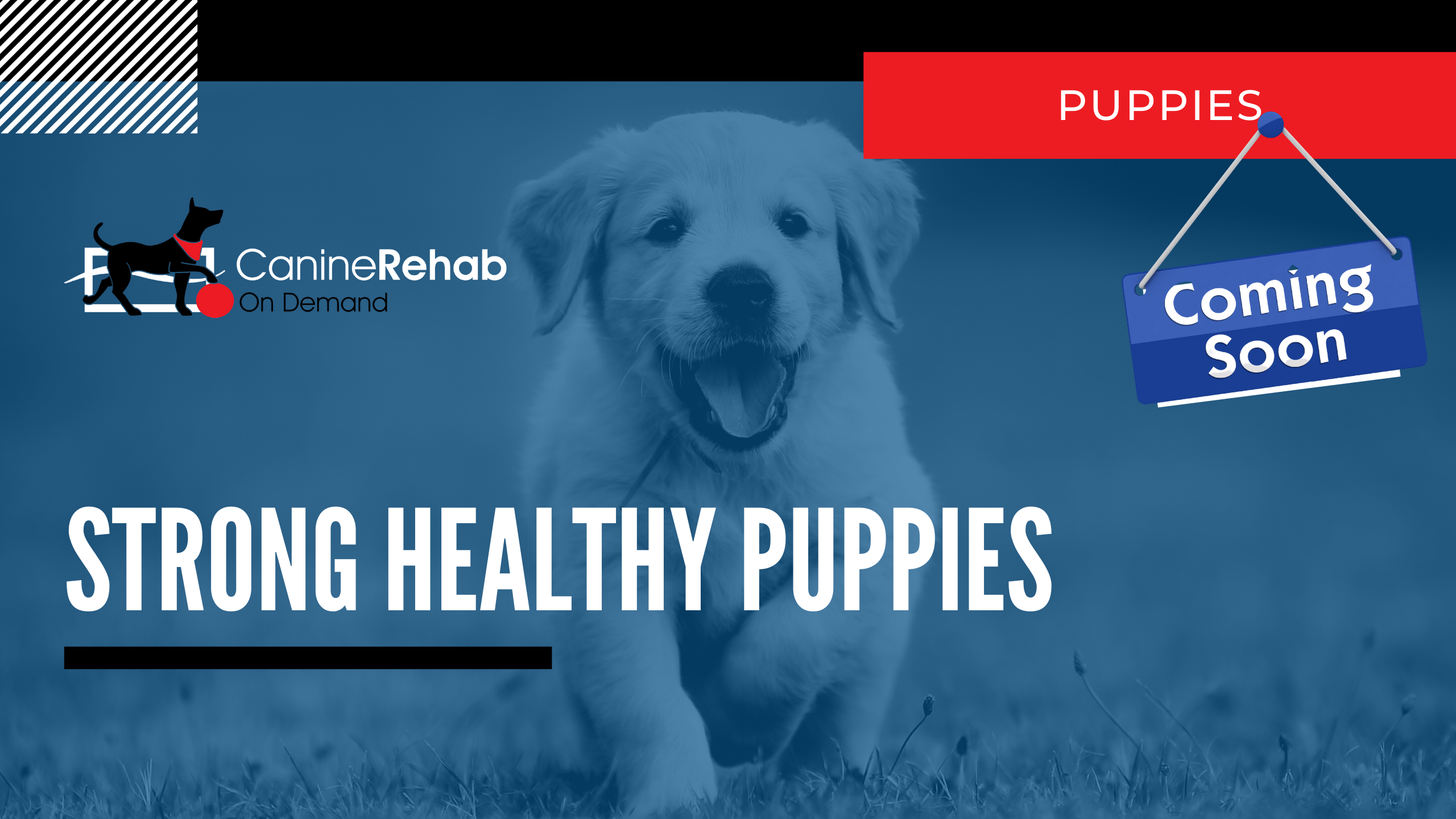 Strong Healthy Puppies Coming Soon