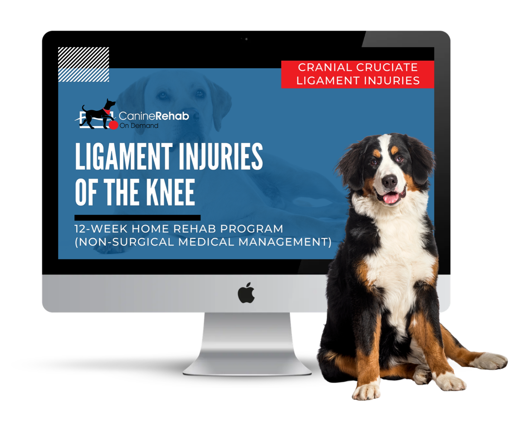 Ligament Injuries of the Knee Non-Surgical