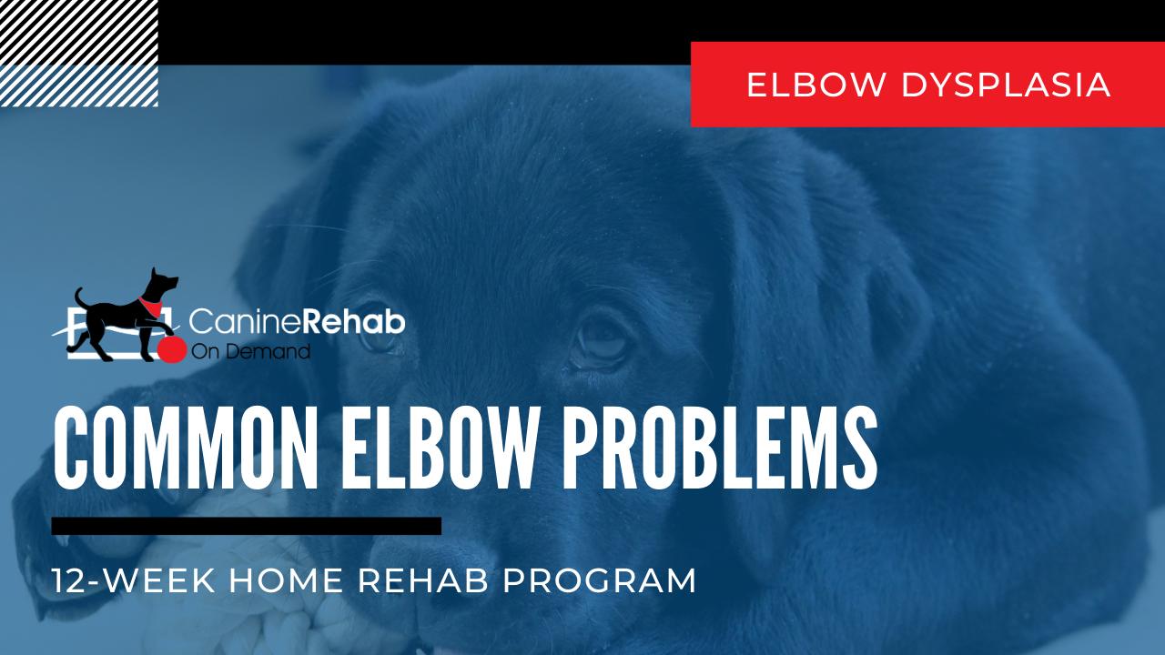 Elbow Dysplasia 12 Week Home Rehab Program