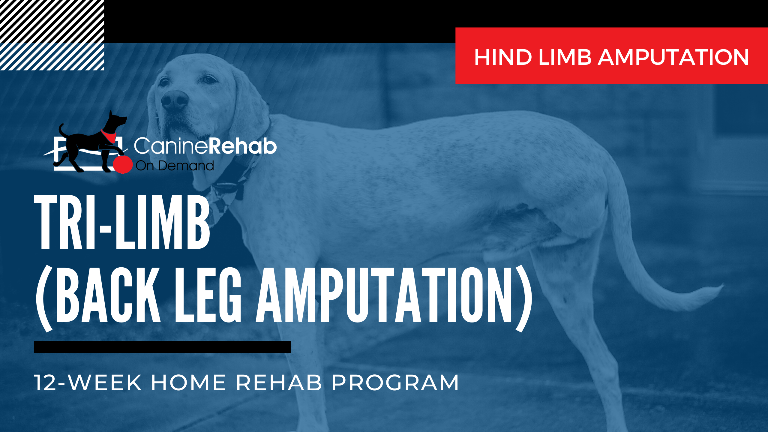 12-Week Home Rehab Program for Back Leg Amputation