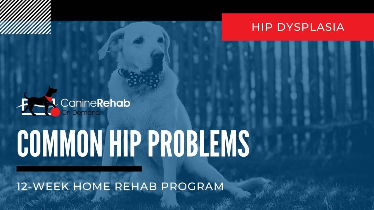 Hip Dysplasia 12 Week Home Rehab Program