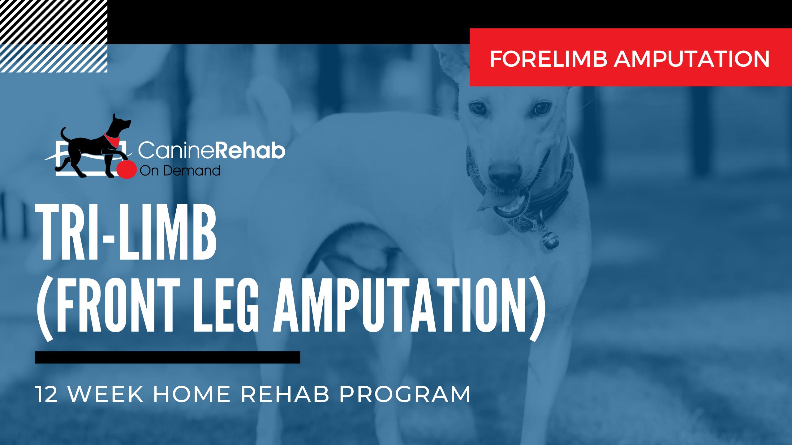 12-Week Home Rehab Program for Front Leg Amputation