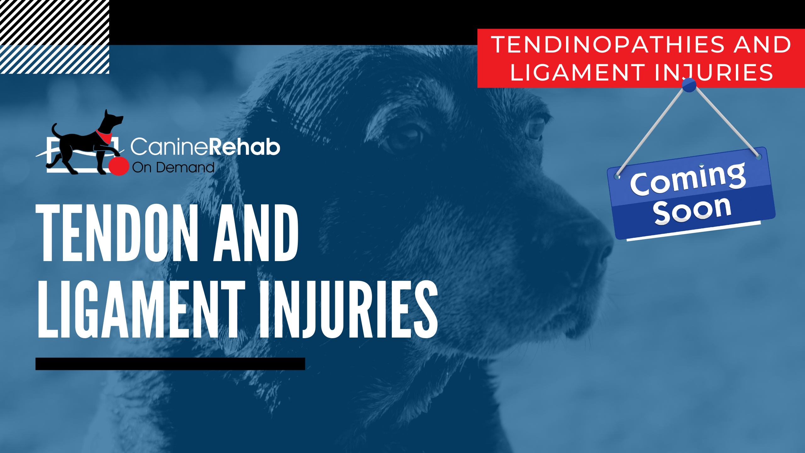 Tendon and Ligament Injuries Coming Soon