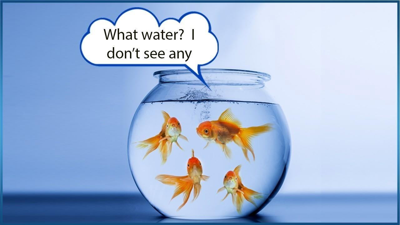 Goldfish swimming in bowl saying What water?  I don't see any
