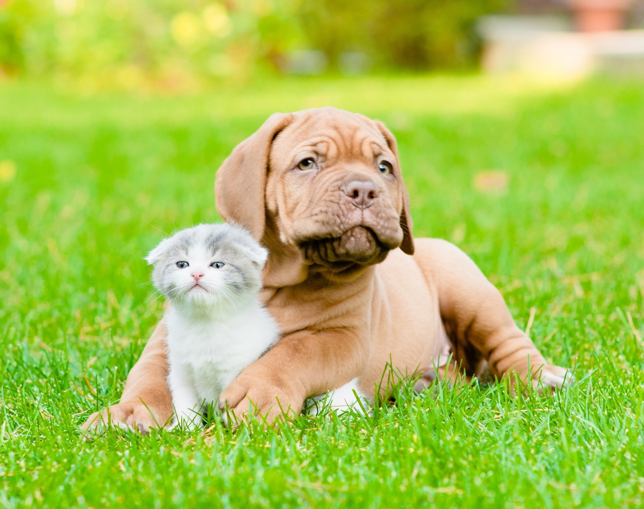 dog-lying-in-grass-with-kitten