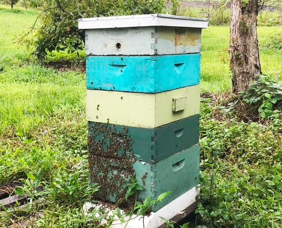 langstroth beehive in the grass