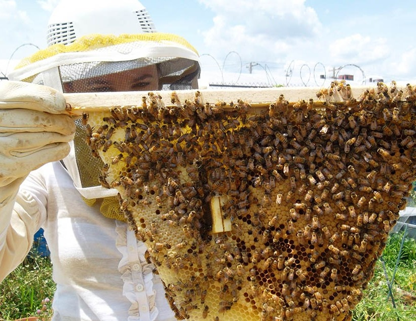 woman with top bar beehive