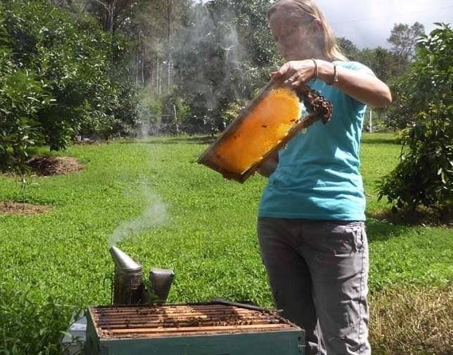 beekeeper with no veil in hawaii