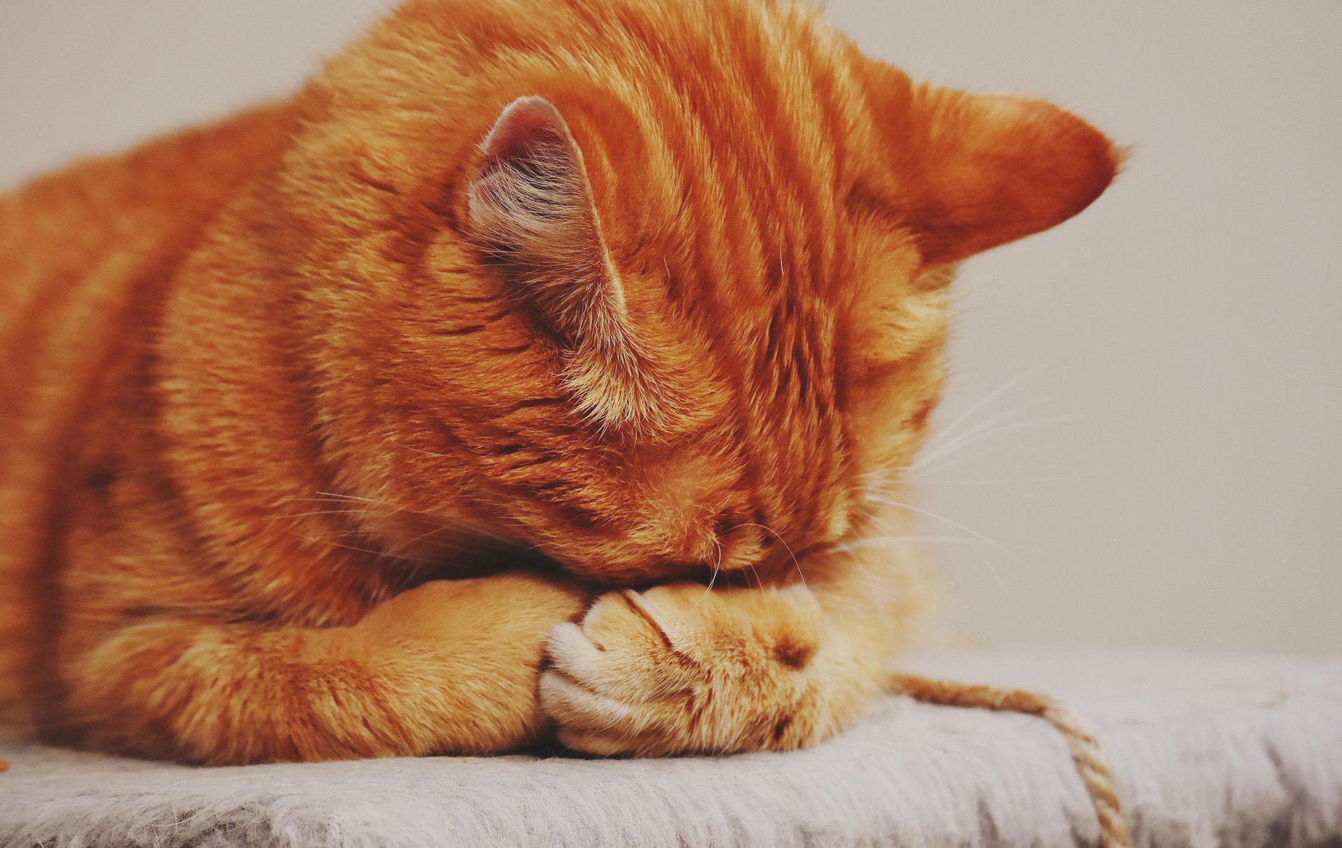 Tabby cat having an emotional day