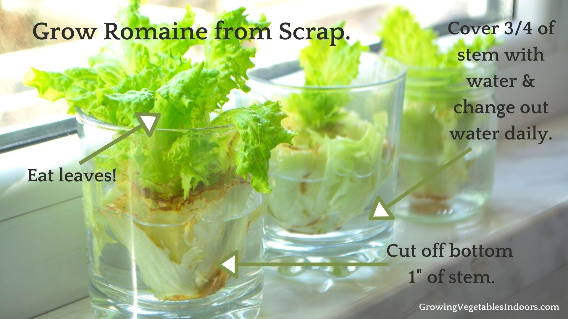 The Basil Node & How to Prune/Harvest Indoor Basil