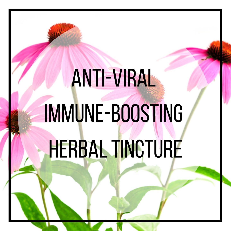 echineaca, elderberry, astragulus immune support