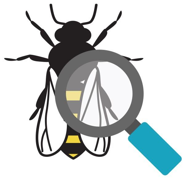 honey bee under a magnifying glass