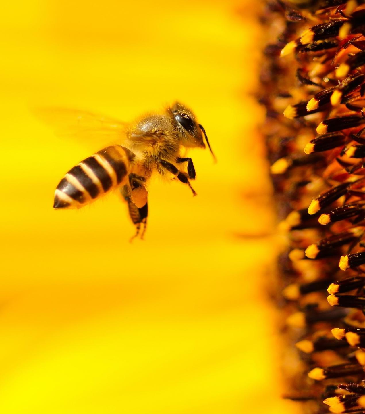 how to save the bees online course