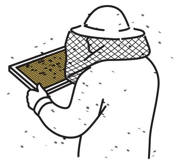 illustration of beekeeper inspecting a frame