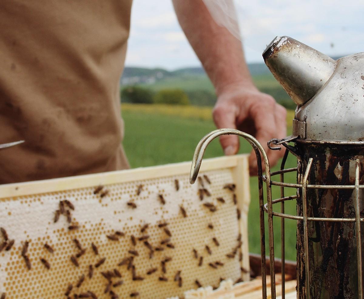 new beekeeper holding a honey frame
