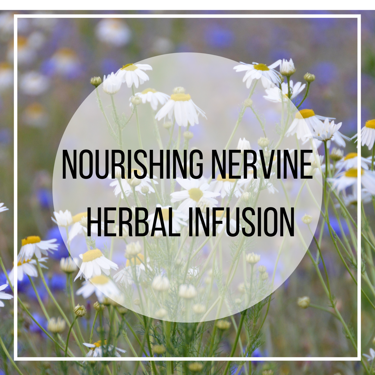 oatstraw, chamomile, linden, nettle herbs for the nervous system