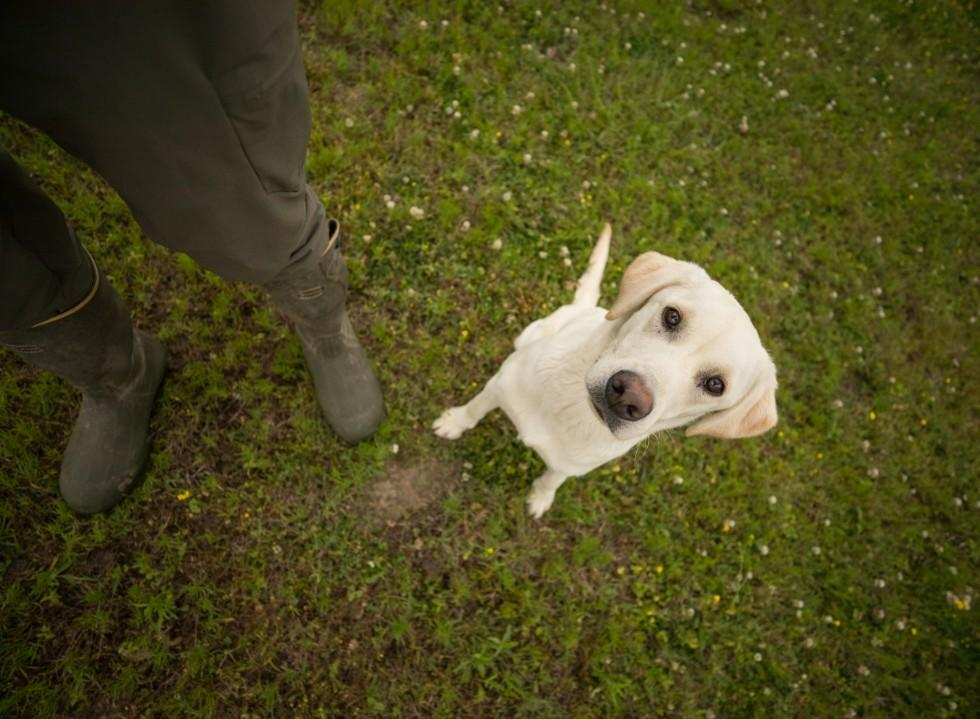 Gundog Basic Obedience