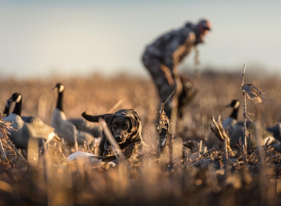 Preparing Your Gundog For Hunting Season