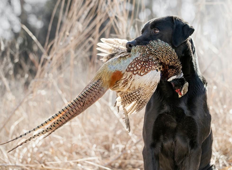 Advanced Gundog Skills