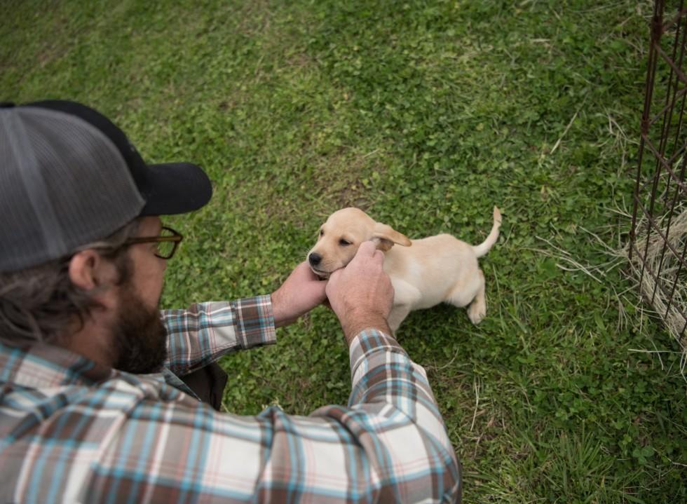 Gundog Puppy Training