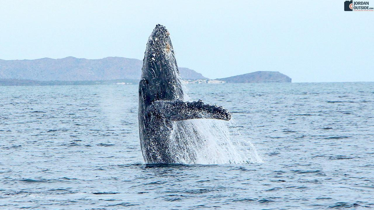 A Whale in the Sea of Cortez