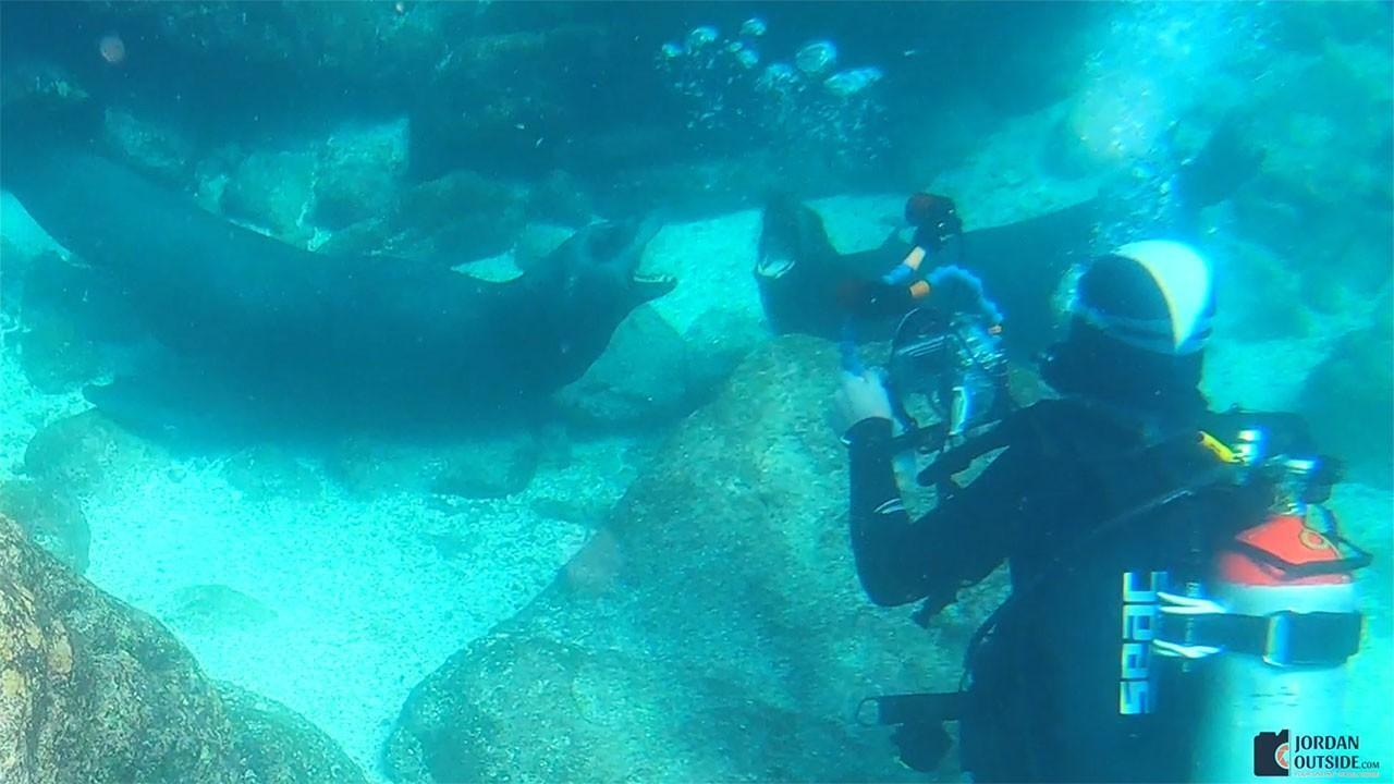 Scuba Divers with Sea Lions