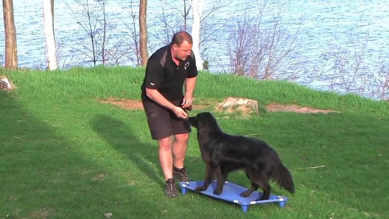 Duke Ferguson Dog Training Genesis