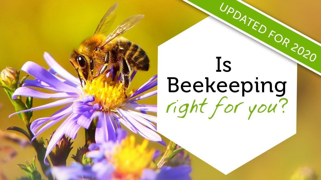Introduction to beekeeping online class