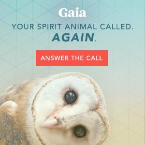 Gaia - Your spirit animal called again - answer the call - Snowy White Owl