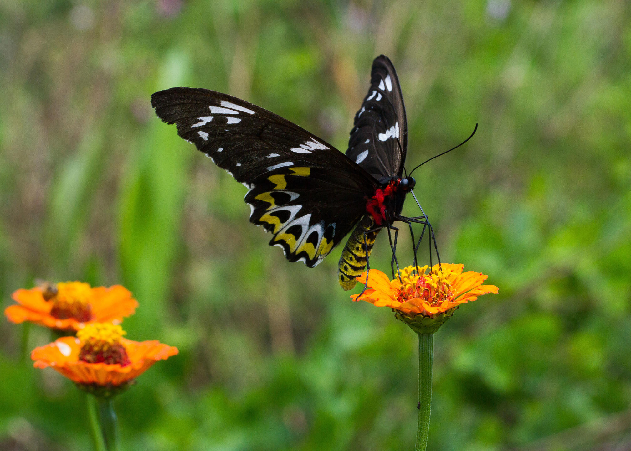 A birding butterfly resting on a flower