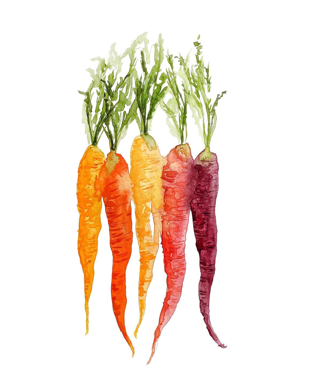 carrots watercolor