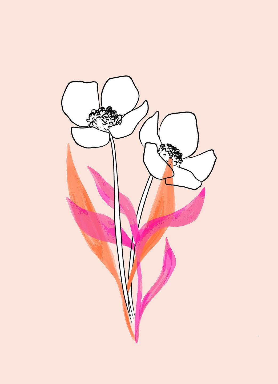 anemone illustration