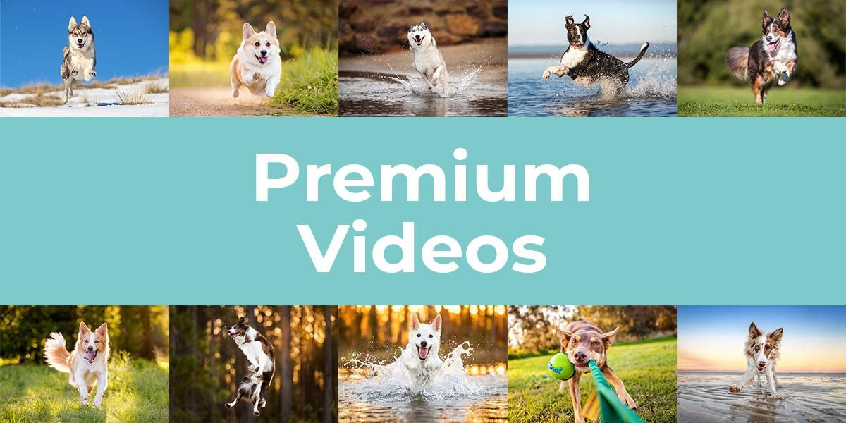 Premium Pet Photography Educational Videos