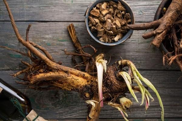 roots for herbal medicine making in the Wise Woman Tradition